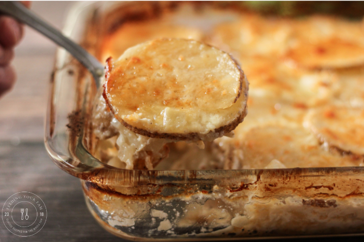 Spoonful of cheesy scalloped potatoes