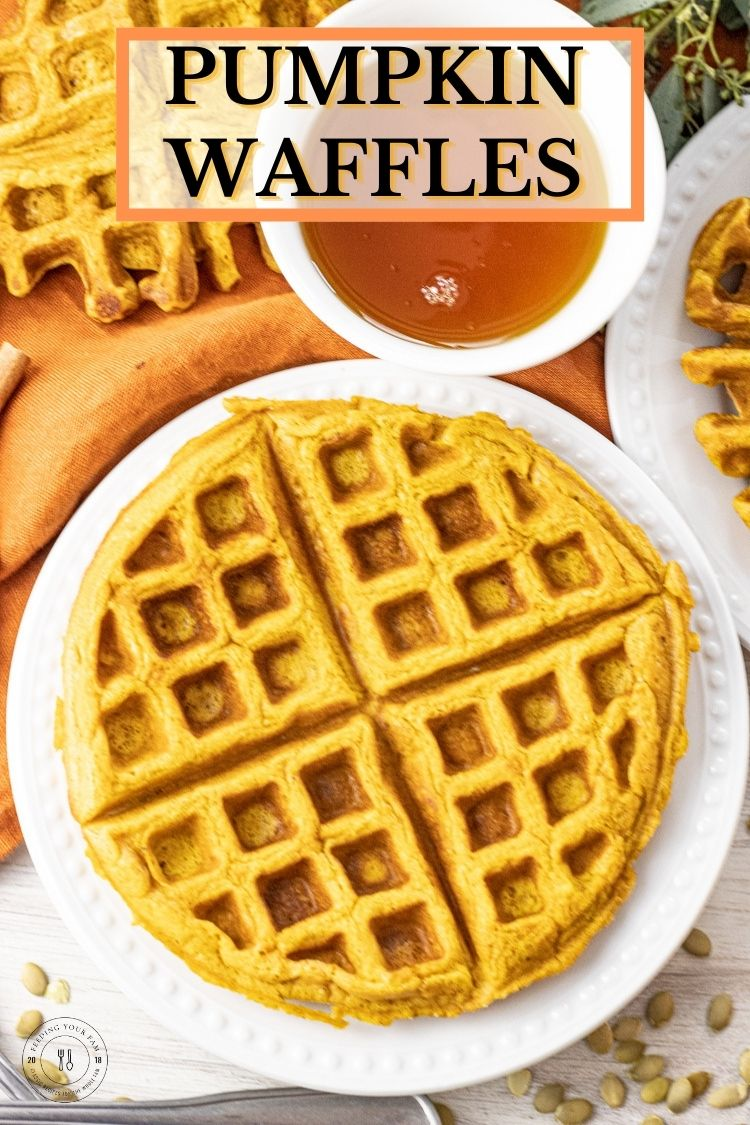 These pumpkin spice waffles have pumpkin puree, the basic ingredients for buttermilk waffles and a touch of pumpkin pie spices. This Pumpkin Waffle Recipe has all the delicious taste of a pumpkin pie and the warm, comforting flavors of a fluffy buttermilk waffle. Pumpkin waffles are a perfect way to bring the smells of Fall into your home anytime of the year.